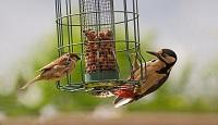 Bird, Duck, Pet and Wildlife Food