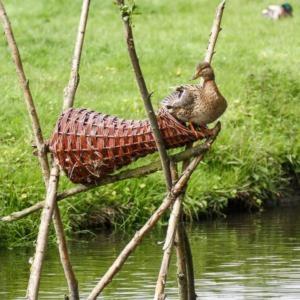 Duck Nesting Baskets