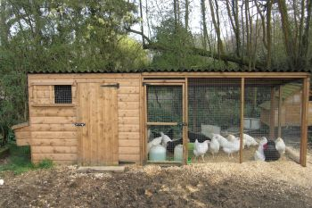 Tall poultry house with nestboxes and large adjoining run