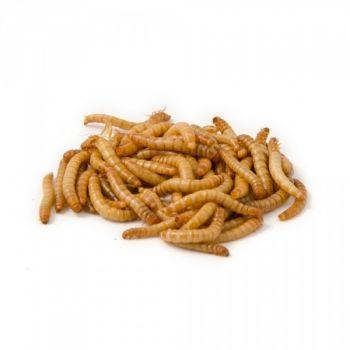 Dried Mealworms 500g wild birds love them!