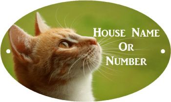 Ginger Cat Full Colour UV Printed Metal House Plaque - Large