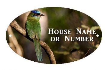 Green Jay Bird UV Printed Metal House Plaque - Large
