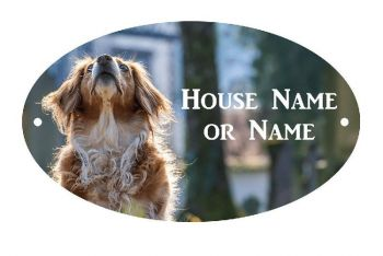 Dog Looking Up UV Printed Metal House Plaque - Large