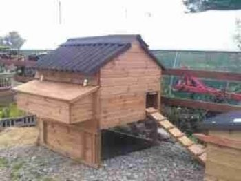 Windsor Junior Poultry House - Raised chicken coop for up to 6 hens